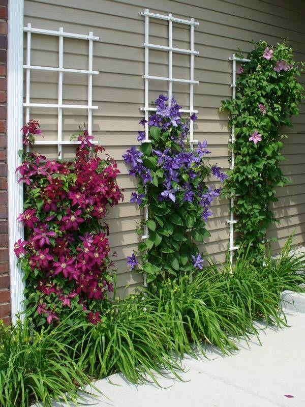 как выбрать лианы для сада