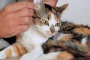 Грумінг кішок: в чому він полягає?
