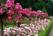 Партнери для троянд в міксбордерах