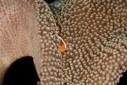 Дивовижний барвистий світ коралових рифів від Adriana Basques