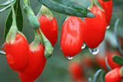 Як приймати ягоди Годжі для схуднення — рецепти вживання