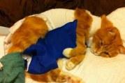У кішки віднялися задні лапи, що робити?