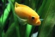 Скільки живуть рибки