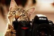 Практичні поради новачкам, як вибрати дзеркальний фотоапарат