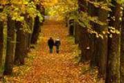 Щоденні прогулянки збільшують тривалість життя
