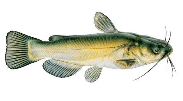 быстрая каша на рыбалку