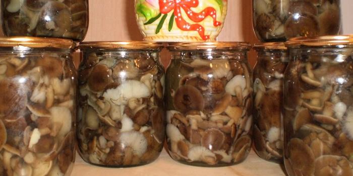 Рецеп на зиму грибов подсосновиков