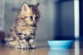 Як доглядати за кошеням?