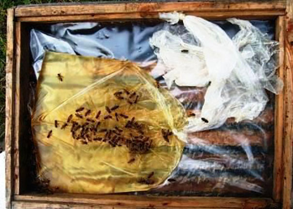Как сделать кормушку пчелам