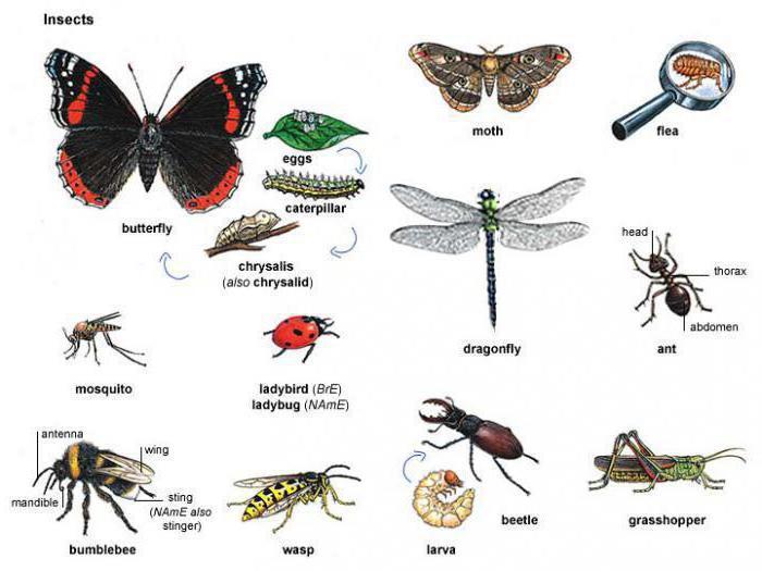 різновідності комах фото