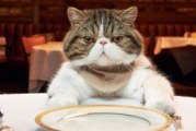Який корм краще для стерилізованих кішок?