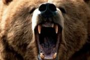 Коли і чим особливо небезпечні ведмеді? Небезпека бурого ведмедя