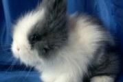Породи декоративних кроликів з фотографіями і назвами порід