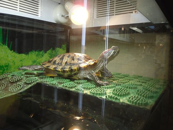 Как сделать островок для черепахи своими руками фото 66