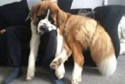 Породи великих собак