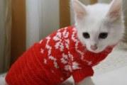 Одяг для кошенят