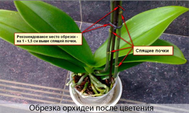 Как выращивают орхидеи в домашних условиях