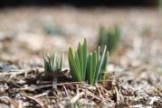 Що посадити в квітні