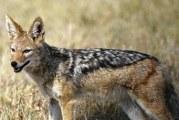 Тварини, що харчуються падаллю: особливості тварин-падальщики