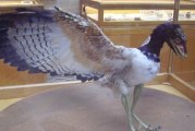 Стародавні види птахів: чому археоптерикс — це птах?