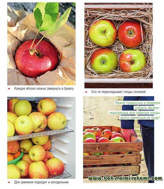 Как хранить яблок в домашних условиях