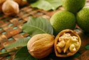 Як проростити волоський горіх: особливості пророщування