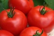 Вирощування і формування куща томату
