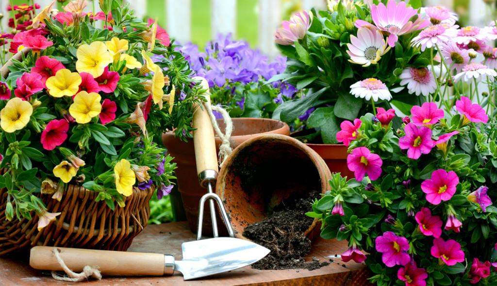 Какие цветы сажают в квартире 21
