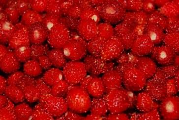 Варення з суниці на зиму — смачний рецепт приготування лісової ягоди