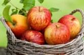 Шарлотка на сковороді з яблуками — швидкий рецепт яблучного пирога на плиті покроково з фото