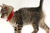 Нашийник від бліх та кліщів для кішок — ефективні вироби з отзовами, інструкцією і цінами