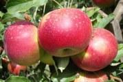 Як прискорити плодоношення плодових дерев