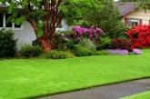 Европейский газон на даче