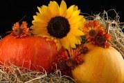 Що принесе рік Сонця-2017 садівникам і городникам