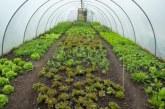 Які посіяти насіння в теплиці для раннього врожаю навесні