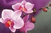 Як правильно доглядати за орхідеєю будинку