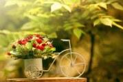 Магія квітів: символізм кольору та числа