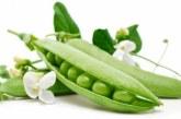 Консервування зеленого горошку в домашніх умовах — кращий рецепт