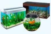 Як вибрати акваріум?