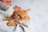 Коли починається перша тічка у кішок? Скільки триває і особливості