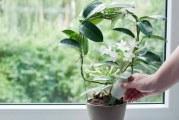 Види підживки для кімнатних рослин