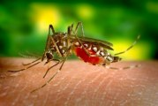 Як захистити малюка від укусів комах