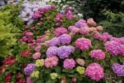 Які бувають добрива для квітів