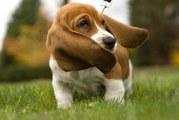 Класи і види кормів для собак