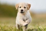 Чому щеня гикає? Можливі причини і способи вирішення