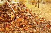 Як зібрати і використовувати в саду опале листя