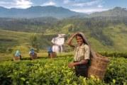 Що привезти з Шрі-Ланки: сувеніри, одяг, косметика