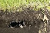 Як боротися з землерийкою